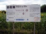 SampoKotoHimawari20180816-150915.JPG