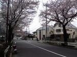 SampoSakura20120407-120543.JPG
