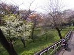 SampoSayamako1004182010_0418_141827.jpg