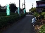 ひまわり畑 所沢 20190816-171130.JPG