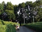 ひまわり畑 所沢 20190816-171204.JPG