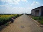 堀兼ひまわり畑 20190817-130125.JPG