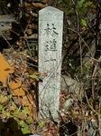 SampoEnzanKouyou20151105-120447.JPG