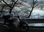 SampoEnzanSakura 20190331-113104.JPG
