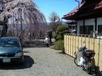 SampoEnzanSakura 20190331-125637.JPG