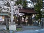SampoEnzanSakura 20190331-162736.JPG