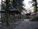 SampoEnzanSakura 20190331-162849.JPG