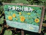 SampoHimawari 20200821-104934.JPG