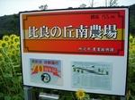 SampoHimawariTokorozawa 20200823-110749.JPG