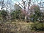 SampoKitayamaKouen 20200301-143347.JPG
