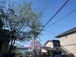 SampoKotesashi 20200425-152511.JPG