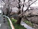 SampoSakura20120407-125327.JPG