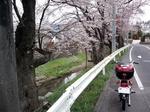 SampoSakura20120407-125414.JPG