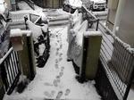 Snow 20200329-110529.JPG