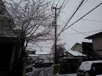 Snow 20200329-110610.JPG