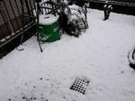 Snow 20200329-110755.JPG